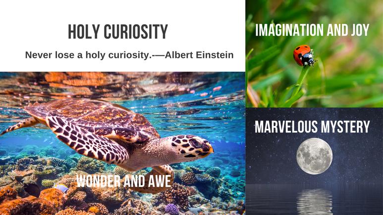 Holy Curiosity