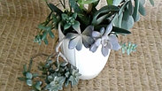 Senecio, Graptopetalum, Rhipsalis and More in Tall Ribbed Ceramic Planter