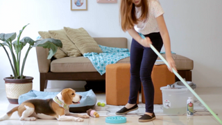 An Afternoon with Bailey the Beagle & Fetch!