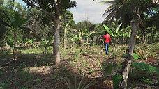 SPOT LESELAM : Les arbres protègent le sol