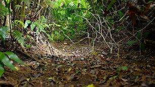 Regards croisés sur l'érosion des sols à Mayotte