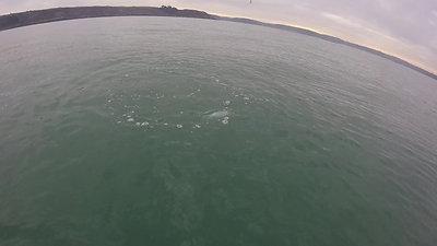 Sortie kayak aux leurres