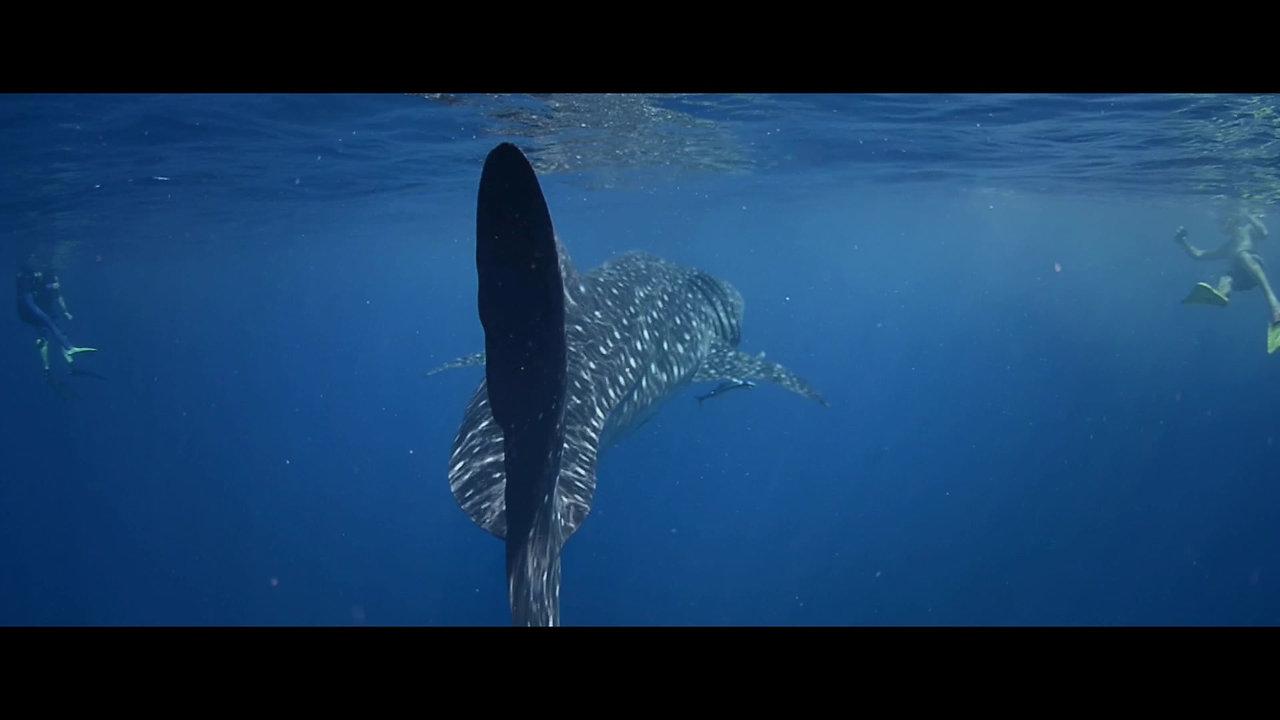 Whaleshark Day