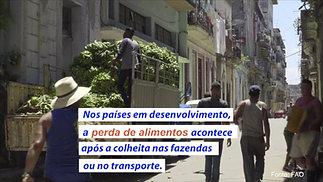 Cultivando um Mundo Melhor - Brasil