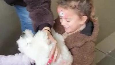 הבאת כלב מקפריסין לישראל
