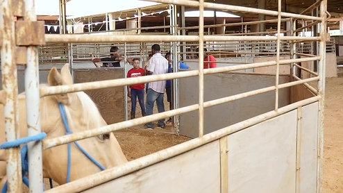 Rodeo Cuts pt.3