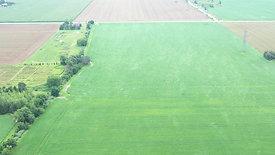Wind Blowing In Corn Field