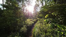 Walking In Forest
