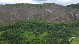 Gypsy Moths Destroy Forest