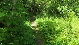 Dense Forest and Path