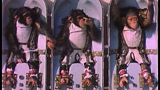HAM Astrochimp#65