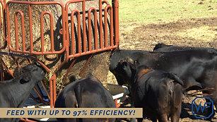 Western Pro Feeder - Cattle