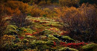Iceland. Autumn moods