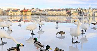 Iceland. Nature moods