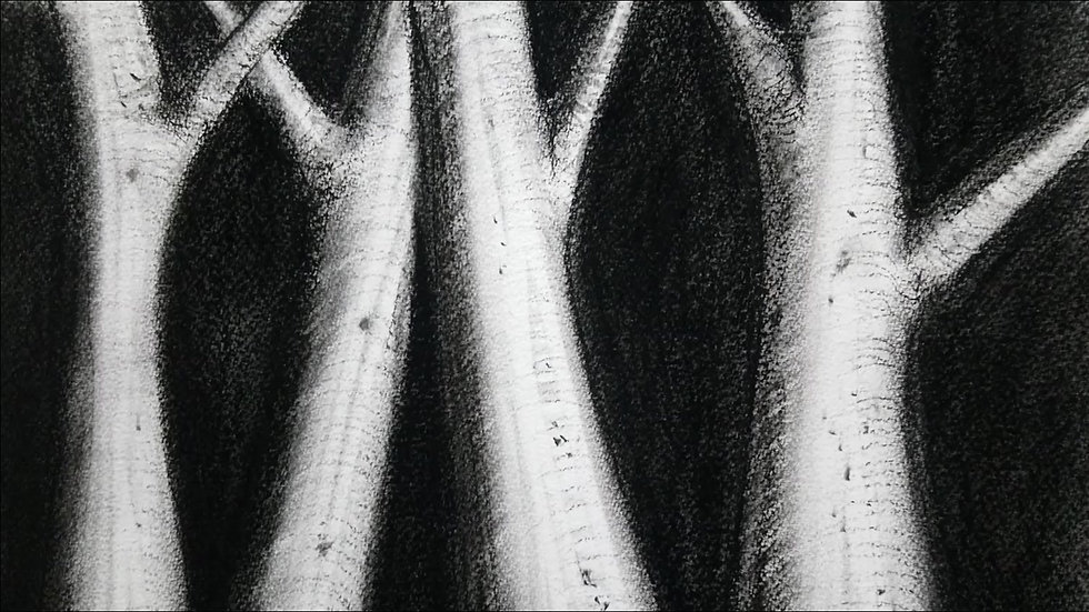 night forest in charcoal