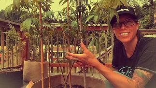 Bottom Branch Pruning