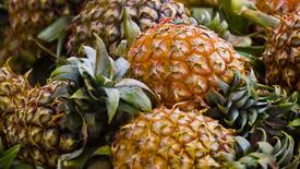 KA-1 Ananasschäler / Pineapple Peeler