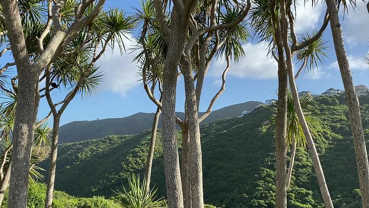 Community Rongoa Forest Proposal