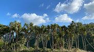 Community Rongoa Forest   Walk through