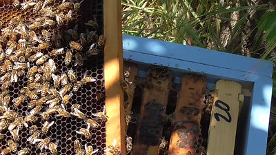 Pollinators; Part 3 of 3, A New Home for a Bee Swarm