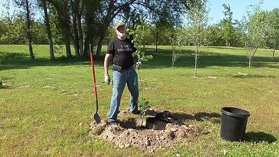 Planting a tree Part 2; Planting into the ground