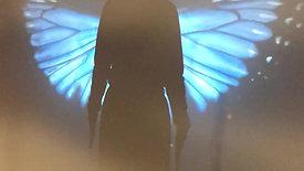 isadorashadowbutterfly
