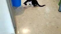 ניסים משחק בעכבר