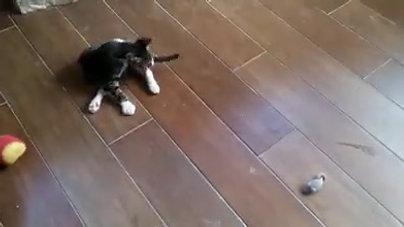 סאני רודף אחרי עכברים (מאי 2018)
