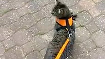 דורותי בטיול בשכונה