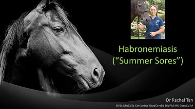 Cutaneous Habronemiasis (Summer Sores) in Horses