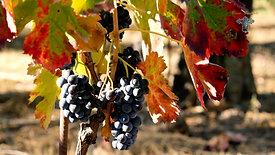 WIITH LOVE - Promo azienda vinicola Casa Maschito