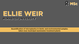 Quantification of microplastics in biotic and environmental samples taken near municipal wastewater treatment plants