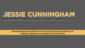Histopathological examination of Lake Chub (Couesius plumbeus ) in a tributary adjacent to Canadian Oil Sands Activity
