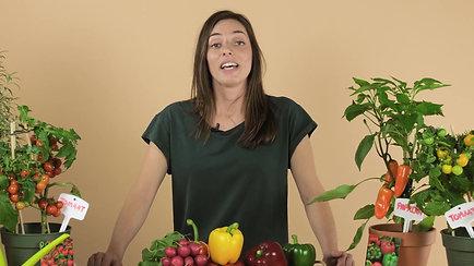 Top 3 groenten om te kweken in je moestuin