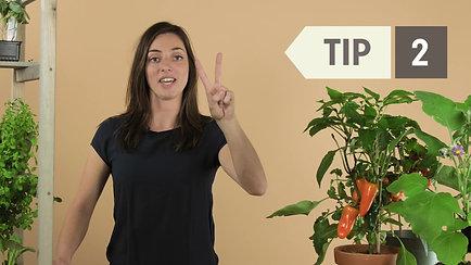 4 tips voor succes in de moestuin