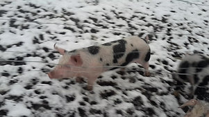 Auch im Schnee gerne draußen