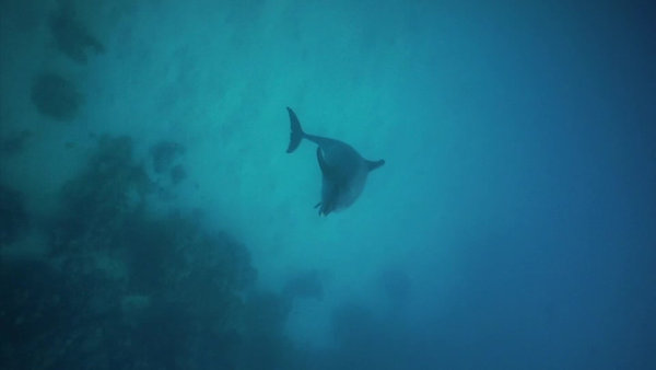Ocean Bluex Hurghada