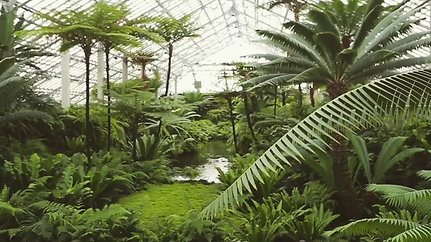 Garfield Park Conservatory Chicago