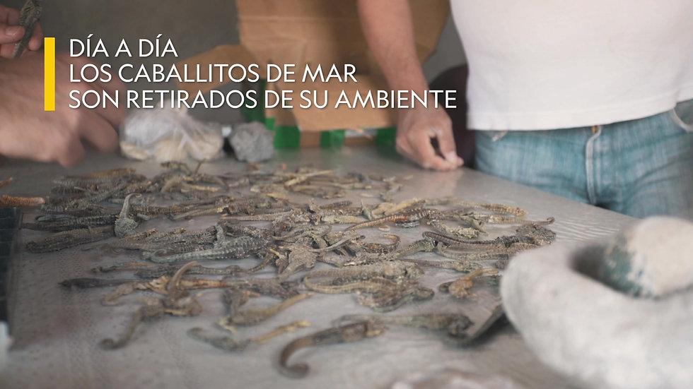 Proyecto Caballito de Mar