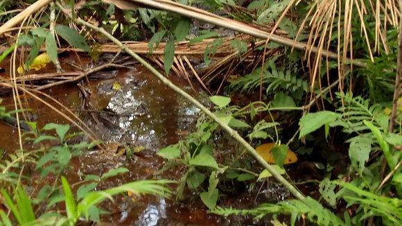 Yaguareté, BANCO CENTRAL $500