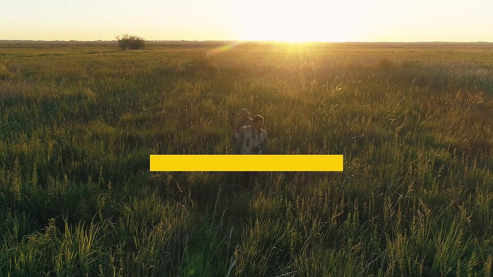Proyecto Tordo Amarillo
