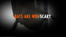 Bats are NOT Scary!