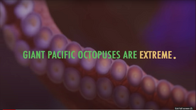 Giant Pacific Octopuses are Extreme
