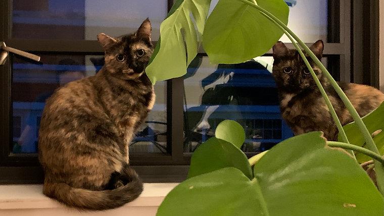 Olive & Caper