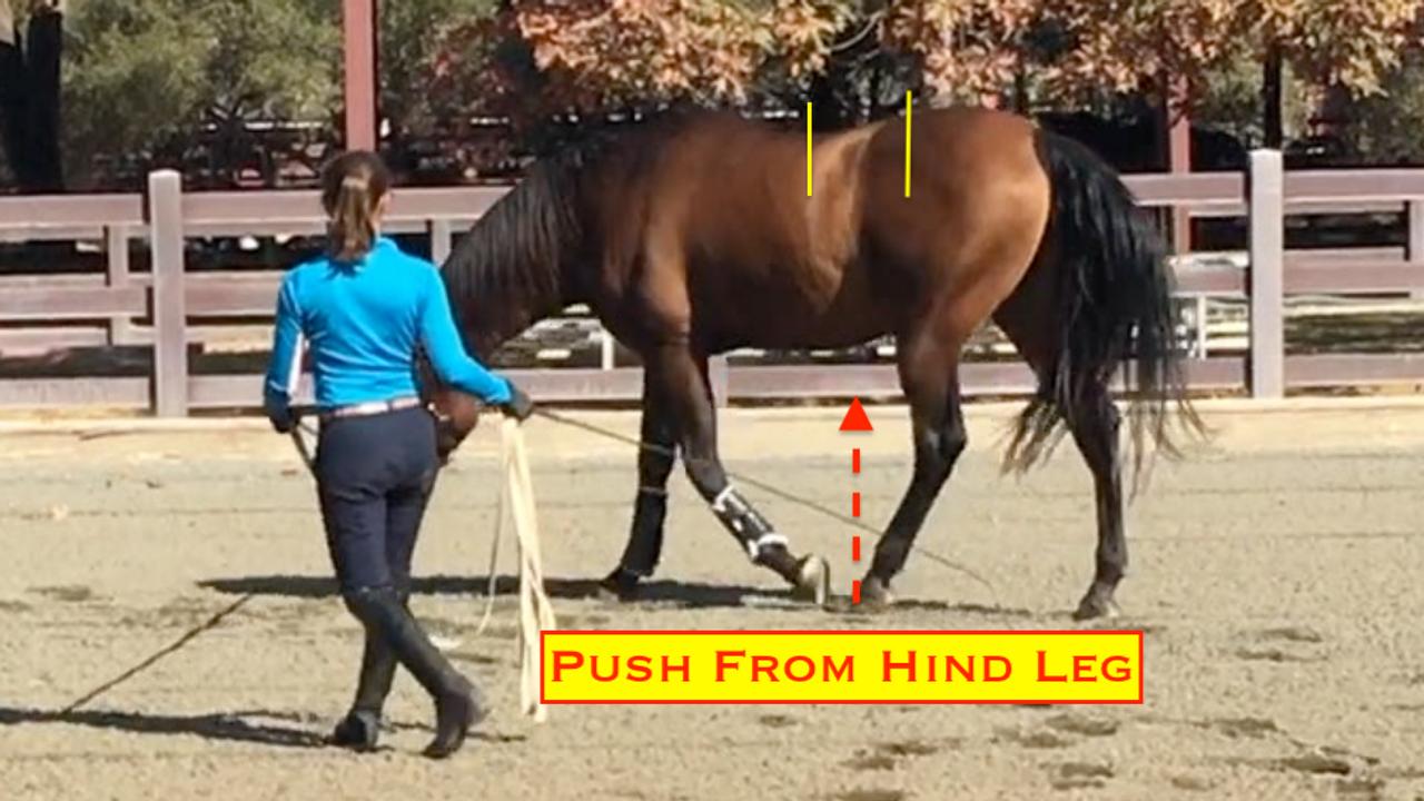 Sculpture Equine Anatomy