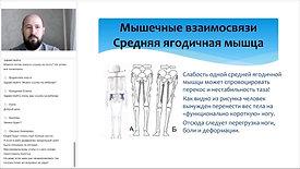Мышечные взаимосвязи стопы и голени