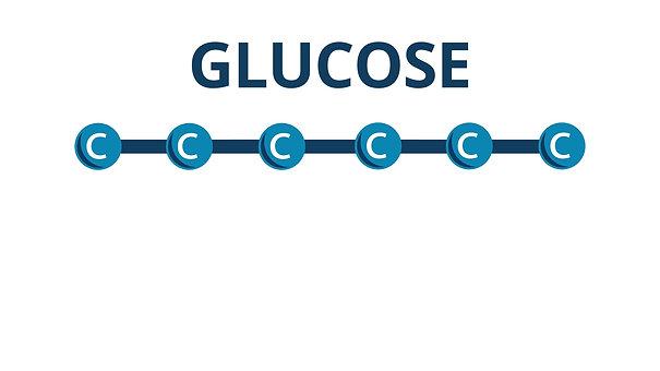 Glycolysis Glucose To Pyruvate