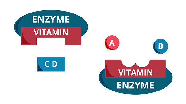 Coenzyme Action
