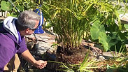 Prepping your plants for winter