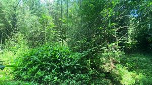 竹の選別 Selecting Bamboos
